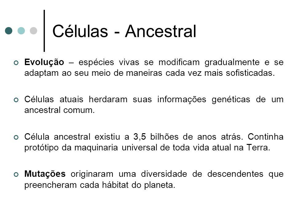 Células - Ancestral Evolução – espécies vivas se modificam gradualmente e se adaptam ao seu meio de maneiras cada vez mais sofisticadas.