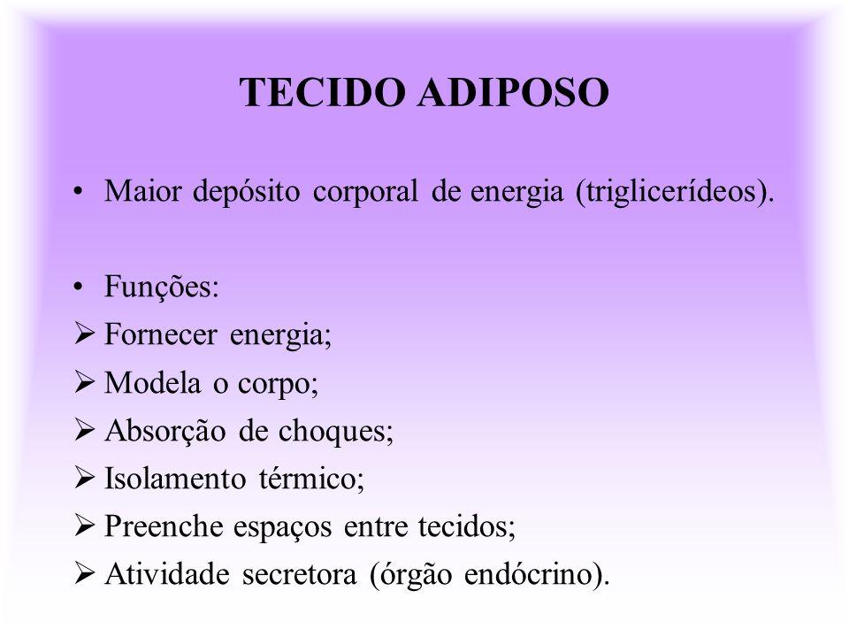 TECIDO ADIPOSO Maior depósito corporal de energia (triglicerídeos).