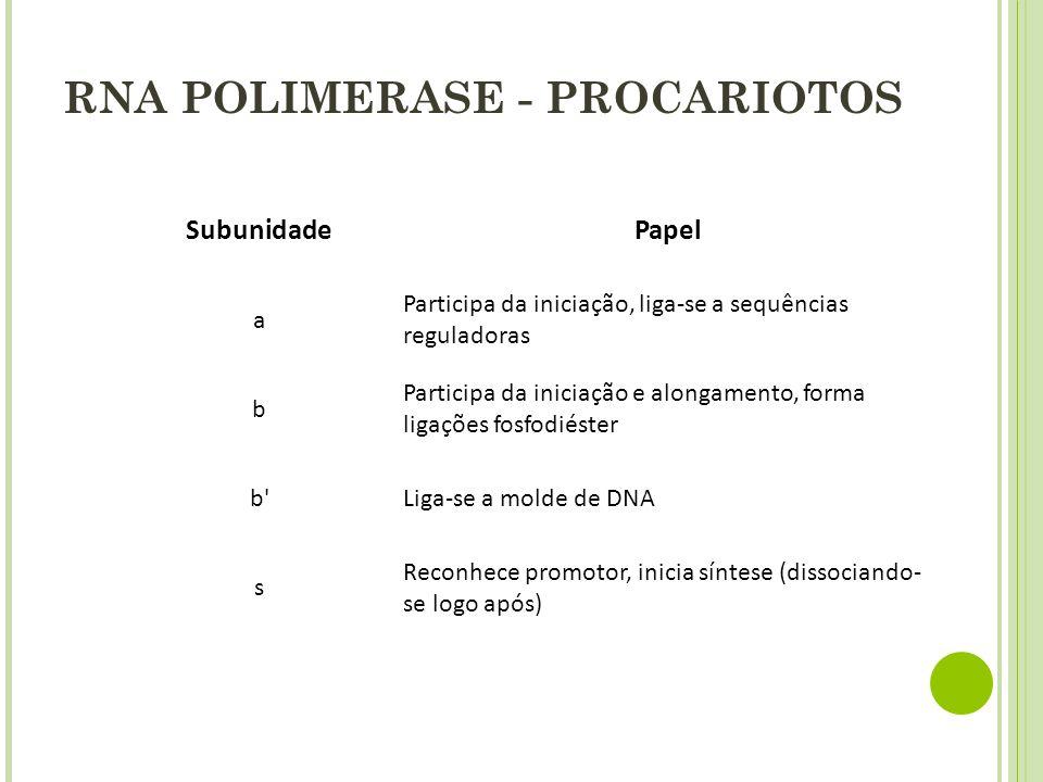 RNA POLIMERASE - PROCARIOTOS