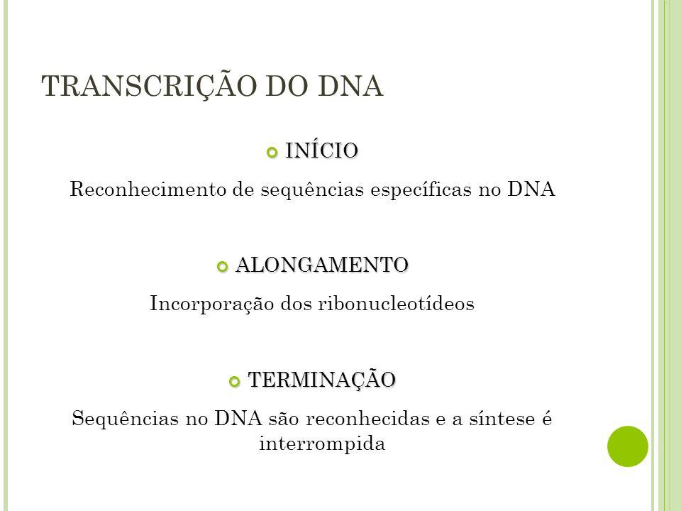 TRANSCRIÇÃO DO DNA INÍCIO