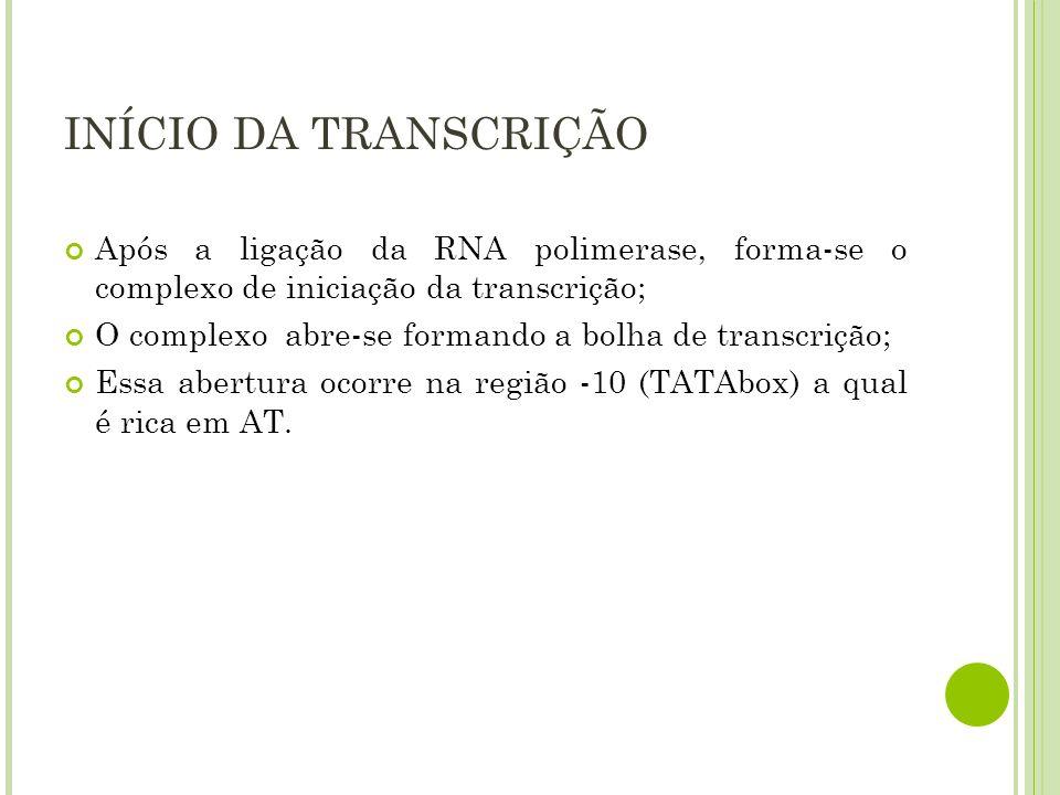 INÍCIO DA TRANSCRIÇÃO Após a ligação da RNA polimerase, forma-se o complexo de iniciação da transcrição;