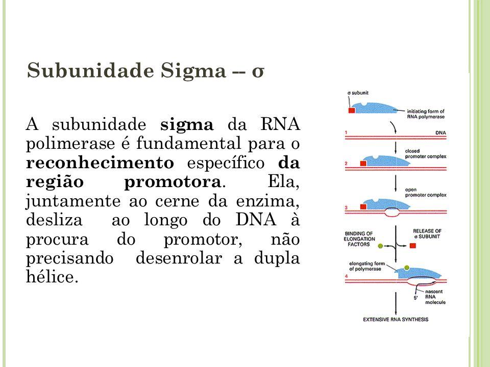 Subunidade Sigma -- σ