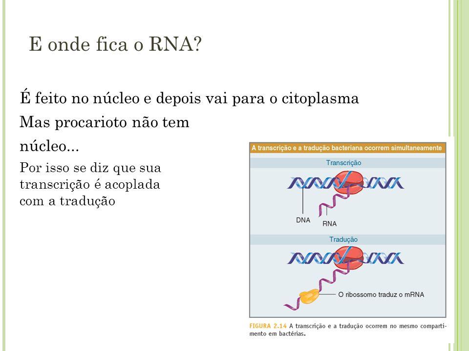 E onde fica o RNA É feito no núcleo e depois vai para o citoplasma