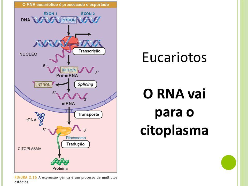 O RNA vai para o citoplasma