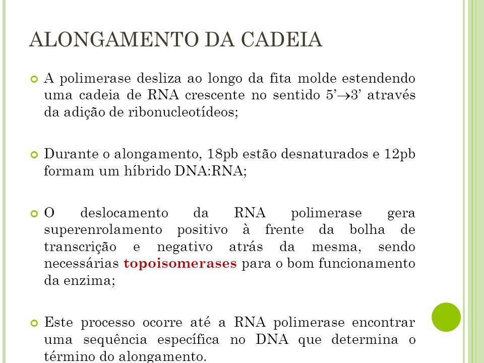 ALONGAMENTO DA CADEIA