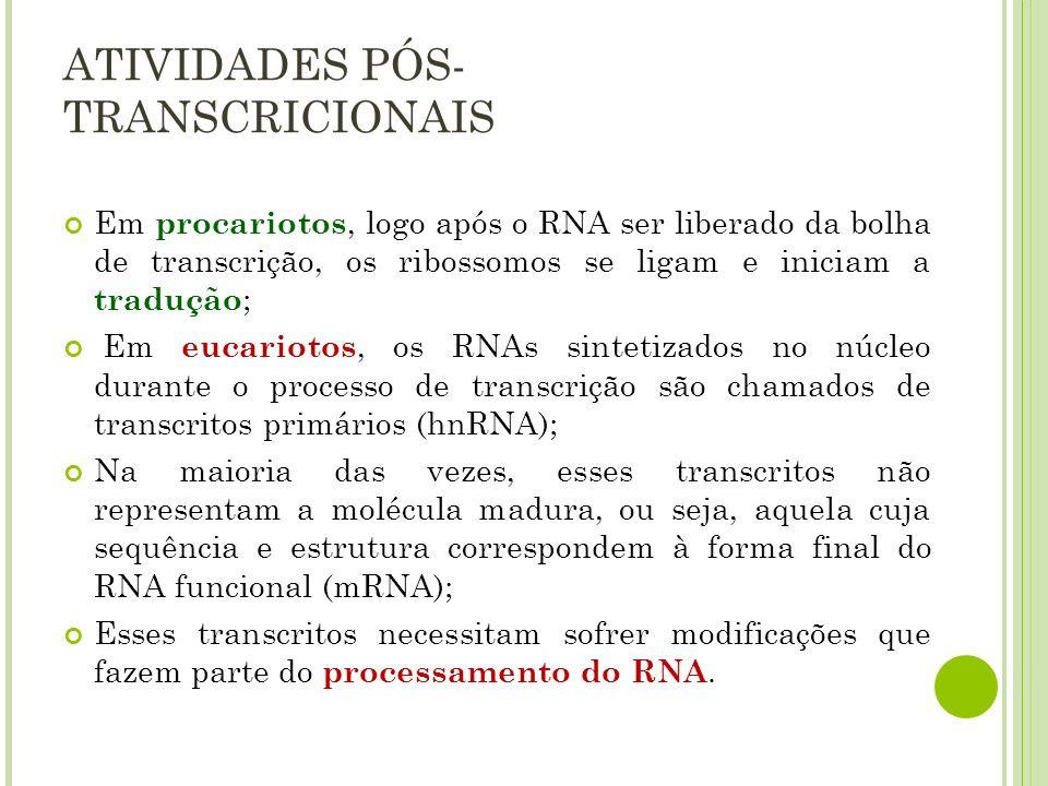 ATIVIDADES PÓS-TRANSCRICIONAIS