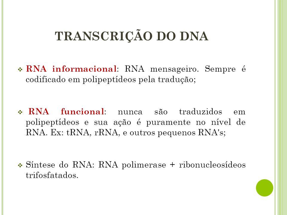 TRANSCRIÇÃO DO DNA RNA informacional: RNA mensageiro. Sempre é codificado em polipeptídeos pela tradução;