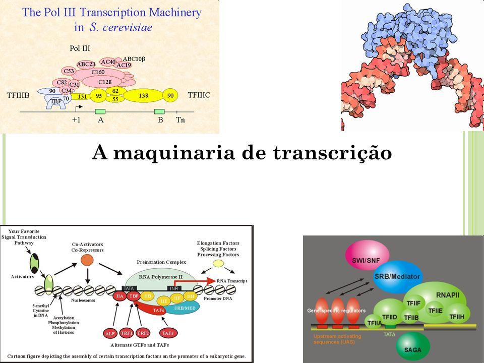 A maquinaria de transcrição