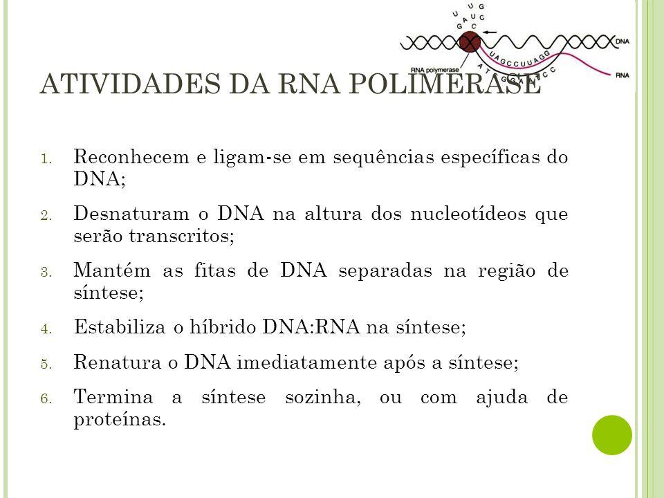 ATIVIDADES DA RNA POLIMERASE