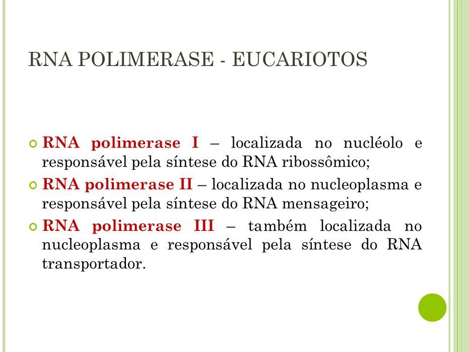 RNA POLIMERASE - EUCARIOTOS