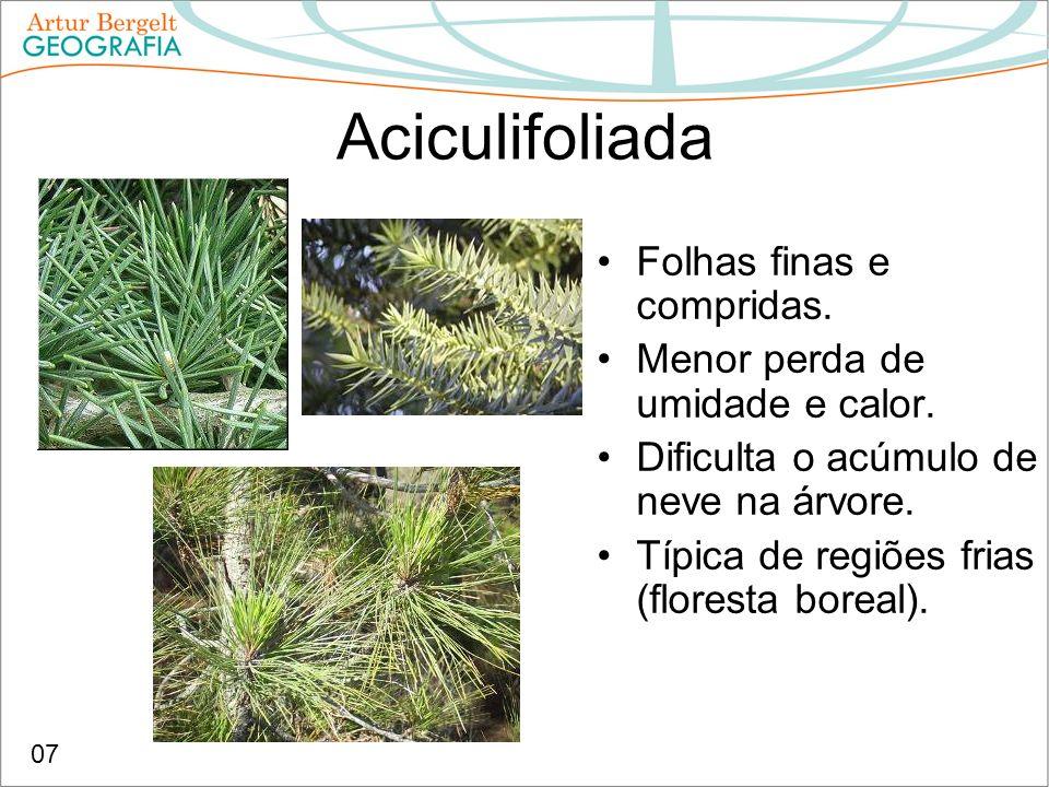 Aciculifoliada Folhas finas e compridas.