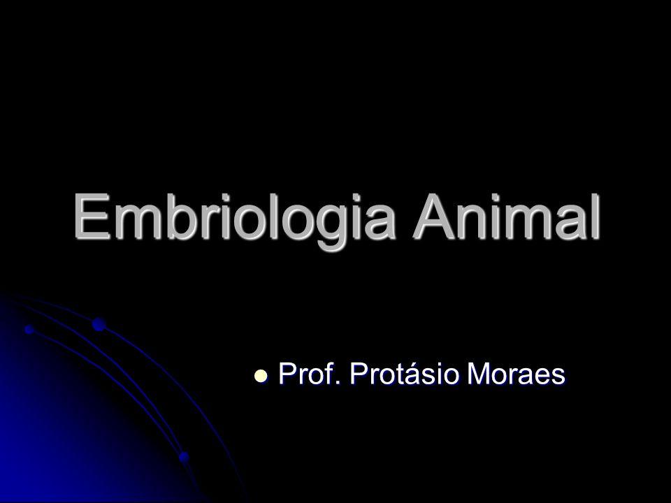 Embriologia Animal Prof. Protásio Moraes