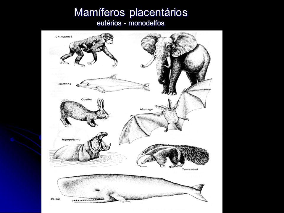 Mamíferos placentários eutérios - monodelfos