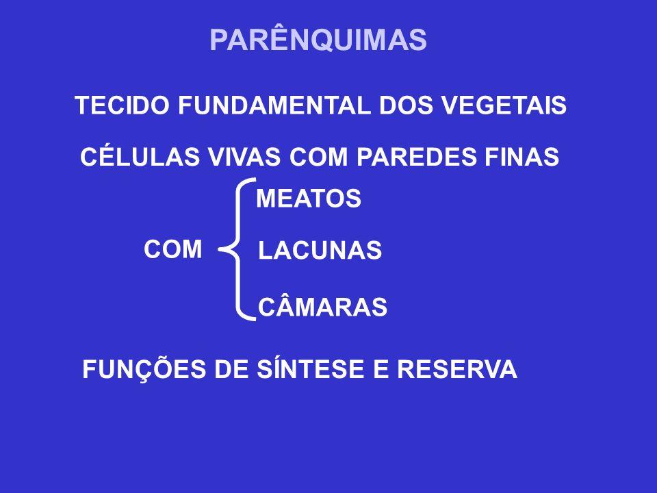 PARÊNQUIMAS TECIDO FUNDAMENTAL DOS VEGETAIS