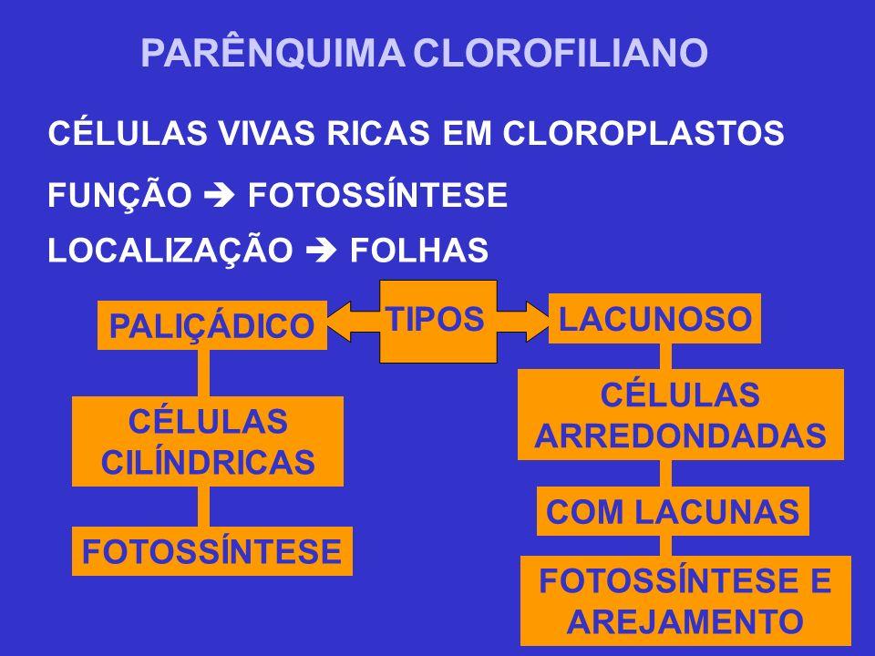 PARÊNQUIMA CLOROFILIANO
