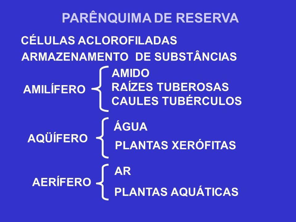 CÉLULAS ACLOROFILADAS ARMAZENAMENTO DE SUBSTÂNCIAS