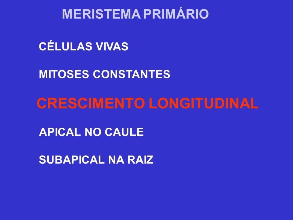 CRESCIMENTO LONGITUDINAL