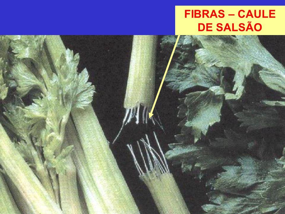 FIBRAS – CAULE DE SALSÃO