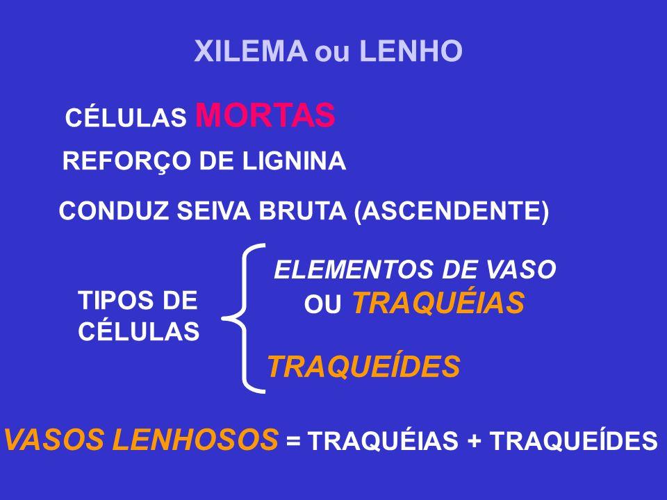 VASOS LENHOSOS = TRAQUÉIAS + TRAQUEÍDES