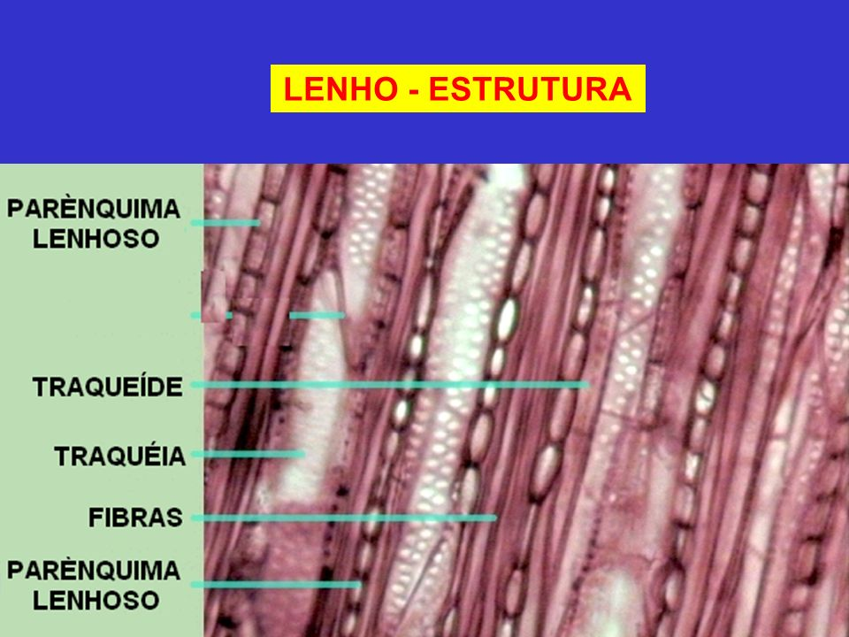 LENHO - ESTRUTURA
