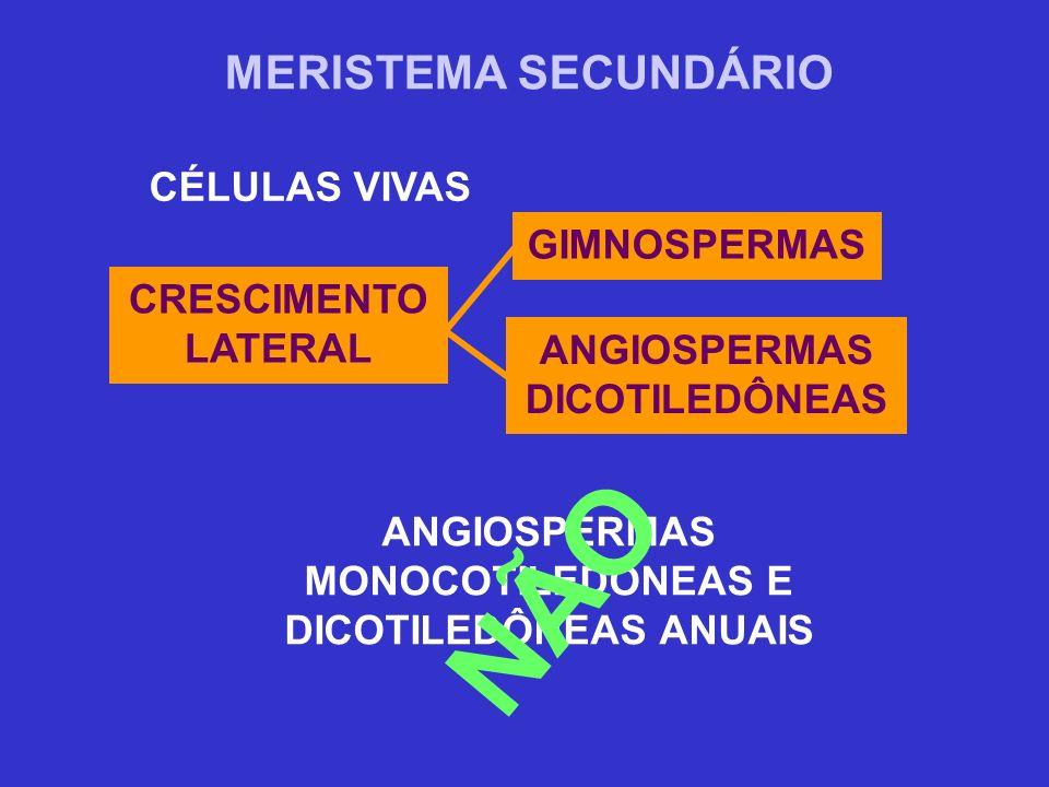 NÃO MERISTEMA SECUNDÁRIO CÉLULAS VIVAS GIMNOSPERMAS
