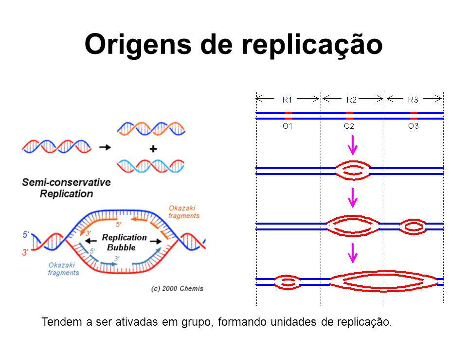 Origens de replicação Tendem a ser ativadas em grupo, formando unidades de replicação. 11 11