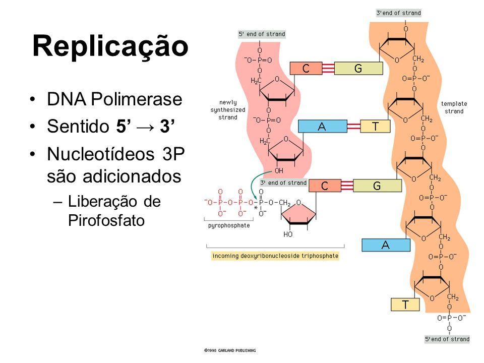 Replicação DNA Polimerase Sentido 5' → 3'