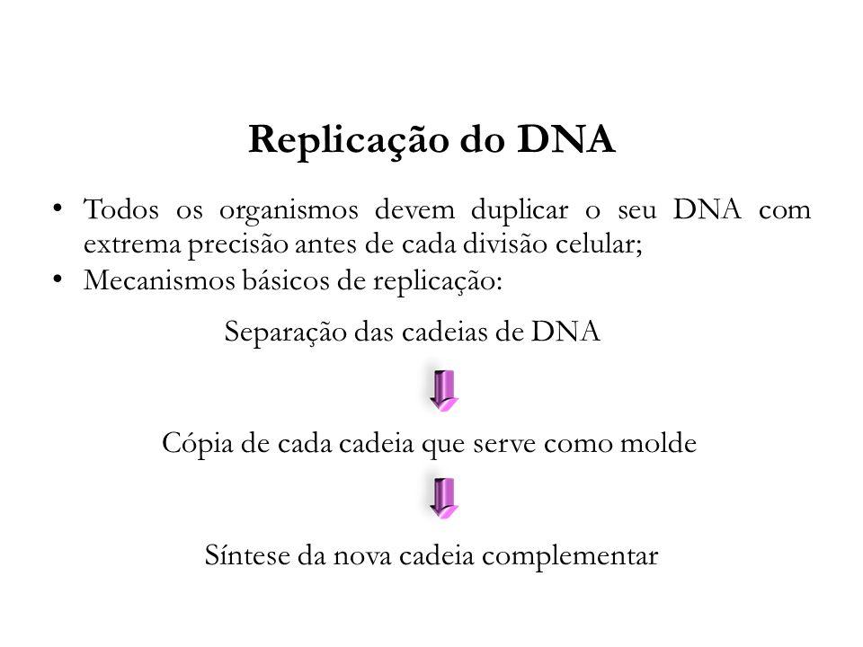 Replicação do DNA Todos os organismos devem duplicar o seu DNA com extrema precisão antes de cada divisão celular;