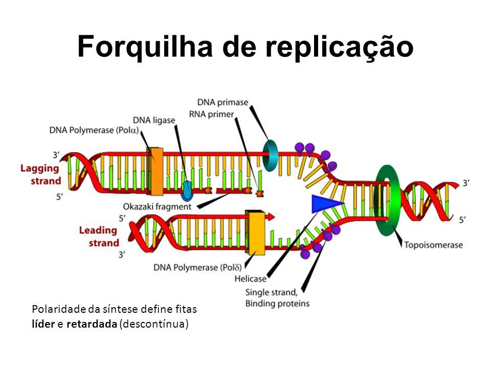 Forquilha de replicação