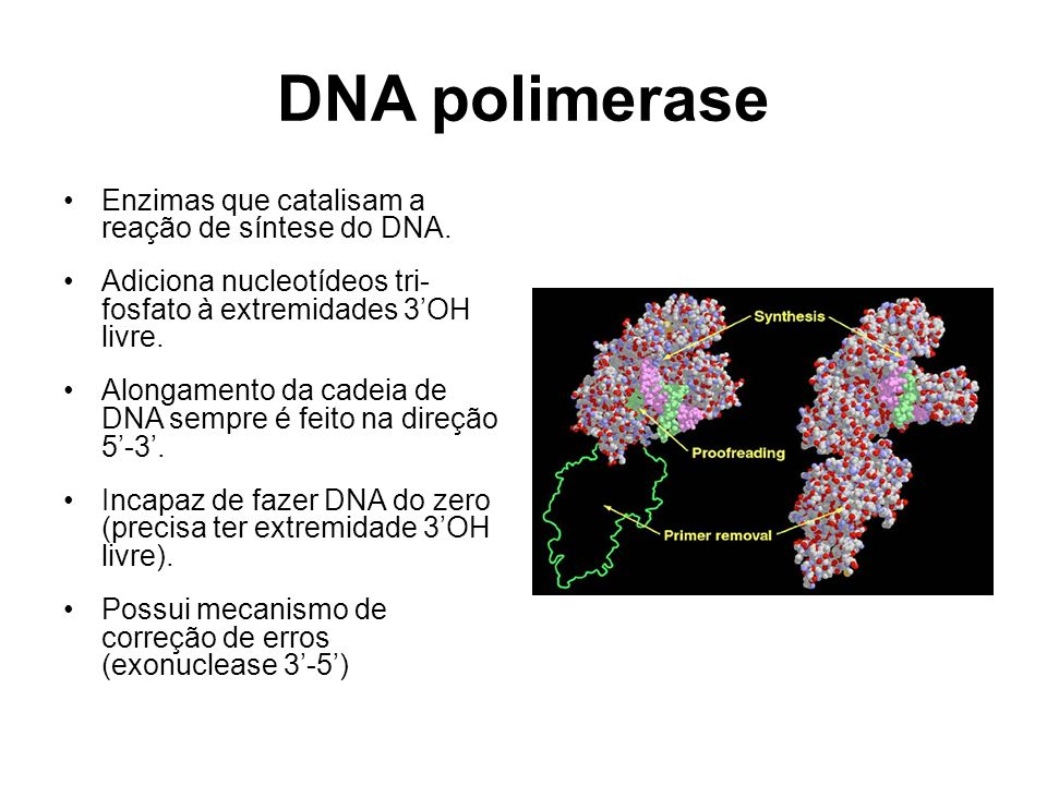 DNA polimerase Enzimas que catalisam a reação de síntese do DNA.