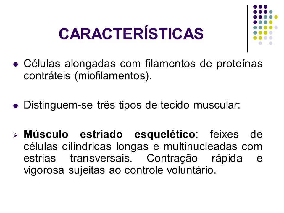 CARACTERÍSTICAS Células alongadas com filamentos de proteínas contráteis (miofilamentos). Distinguem-se três tipos de tecido muscular: