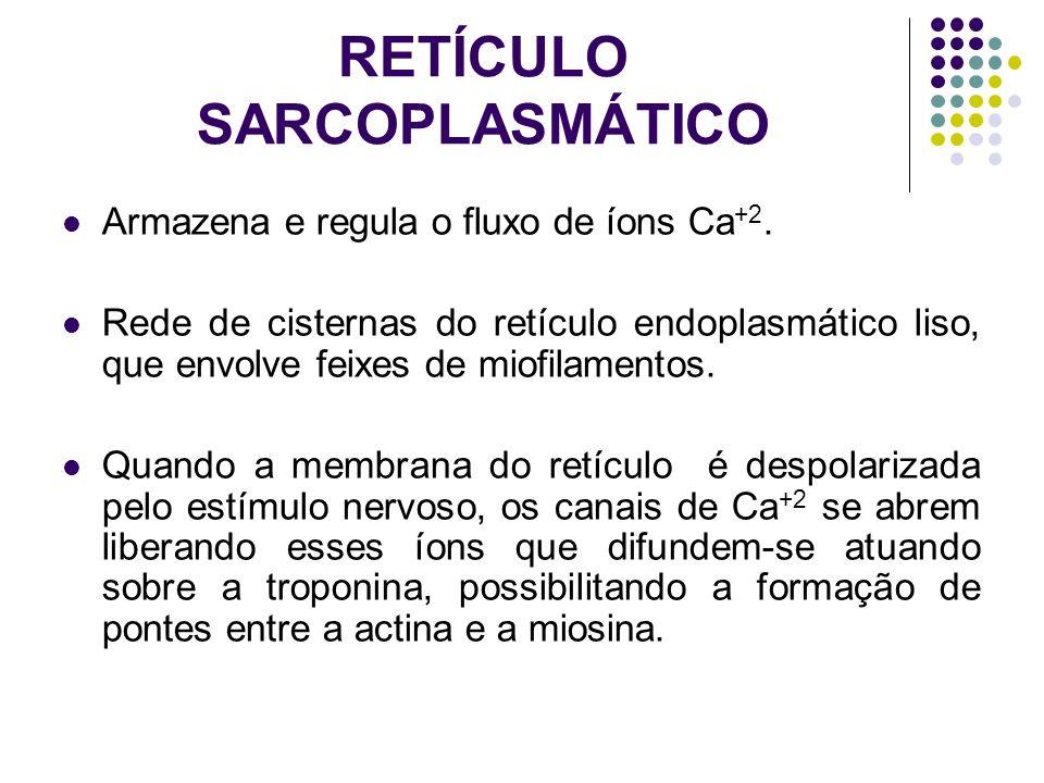 RETÍCULO SARCOPLASMÁTICO