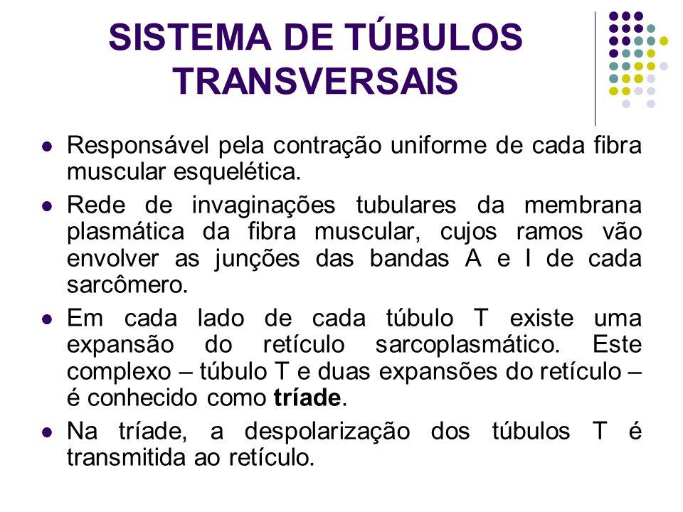 SISTEMA DE TÚBULOS TRANSVERSAIS