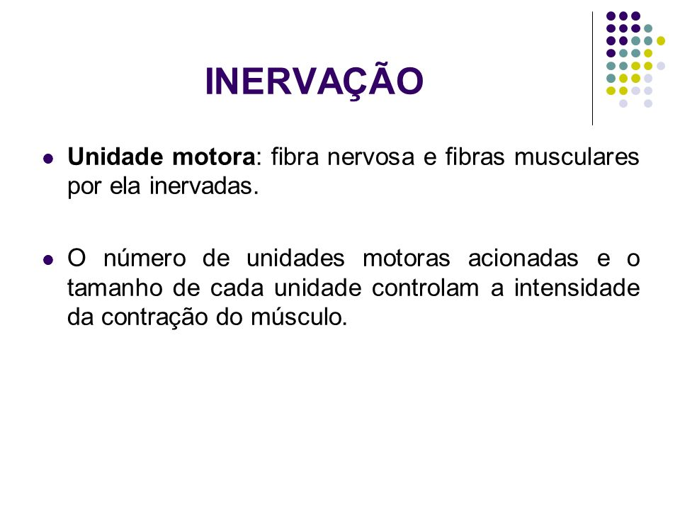 INERVAÇÃO Unidade motora: fibra nervosa e fibras musculares por ela inervadas.