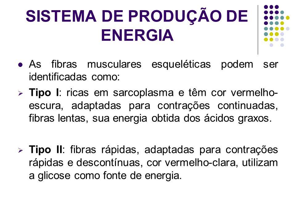 SISTEMA DE PRODUÇÃO DE ENERGIA