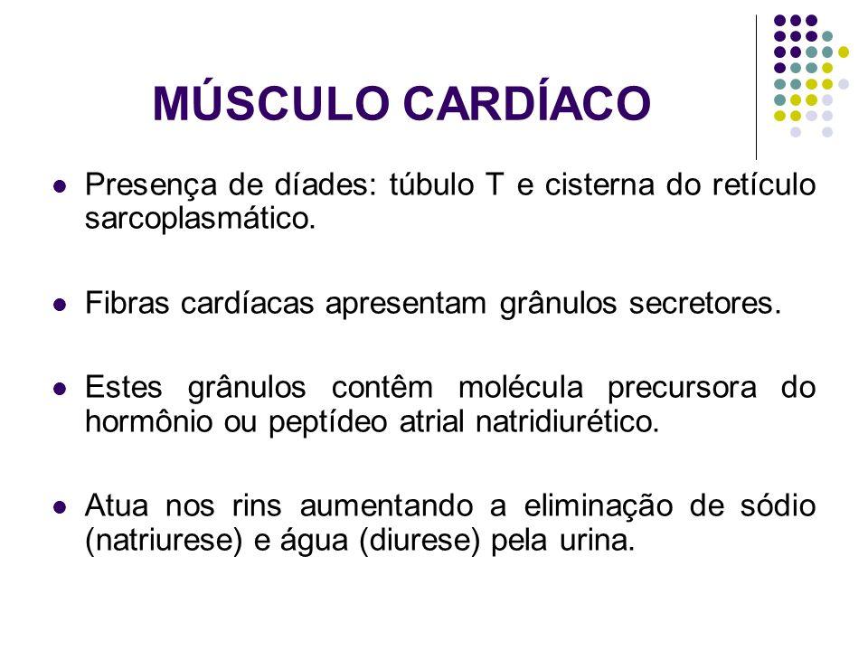MÚSCULO CARDÍACO Presença de díades: túbulo T e cisterna do retículo sarcoplasmático. Fibras cardíacas apresentam grânulos secretores.