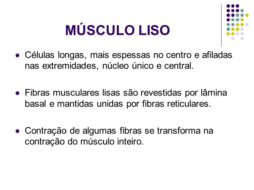 MÚSCULO LISO Células longas, mais espessas no centro e afiladas nas extremidades, núcleo único e central.