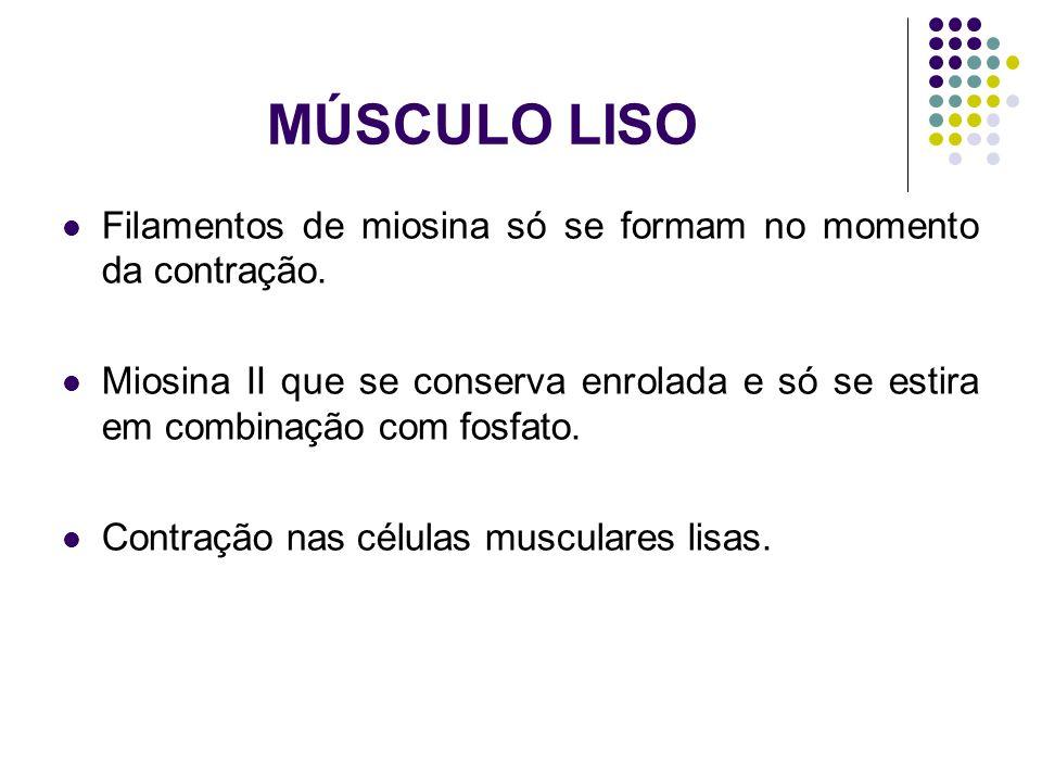 MÚSCULO LISO Filamentos de miosina só se formam no momento da contração.