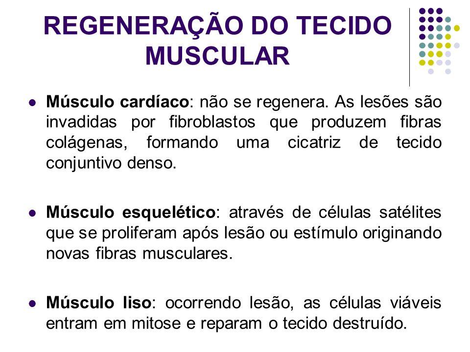 REGENERAÇÃO DO TECIDO MUSCULAR