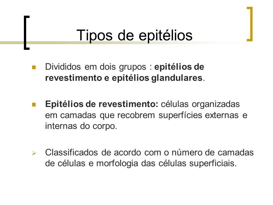 Tipos de epitélios Divididos em dois grupos : epitélios de revestimento e epitélios glandulares.