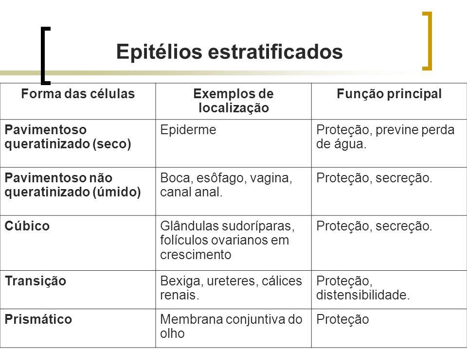 Epitélios estratificados Exemplos de localização