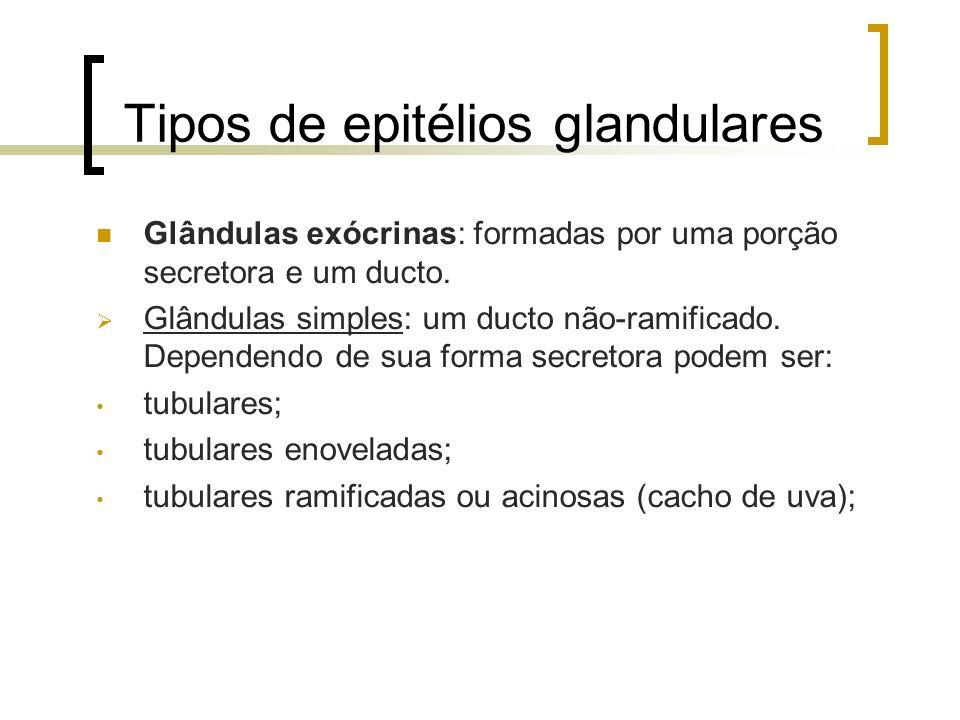 Tipos de epitélios glandulares