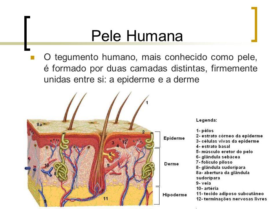 Pele Humana O tegumento humano, mais conhecido como pele, é formado por duas camadas distintas, firmemente unidas entre si: a epiderme e a derme.