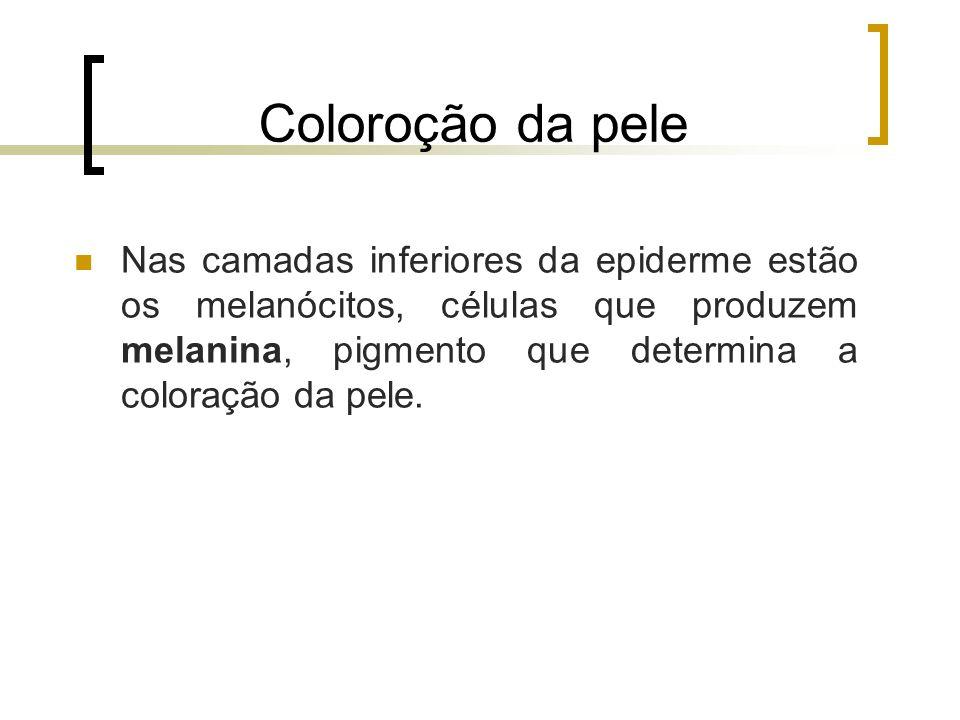 Coloroção da pele