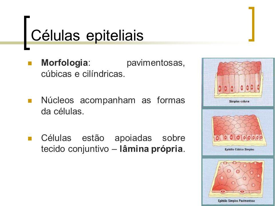 Células epiteliais Morfologia: pavimentosas, cúbicas e cilíndricas.