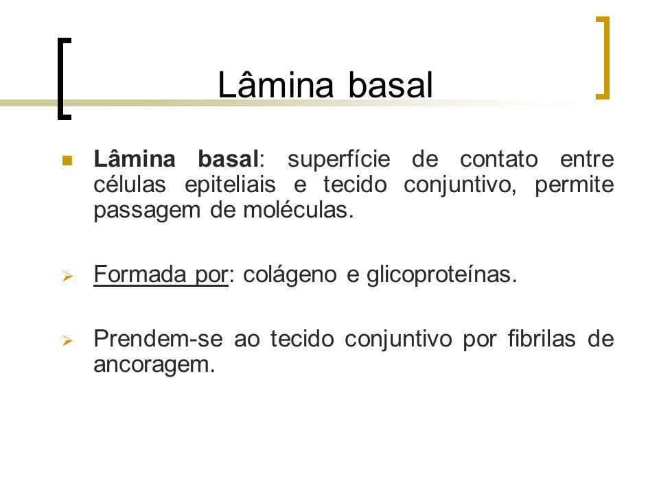 Lâmina basal Lâmina basal: superfície de contato entre células epiteliais e tecido conjuntivo, permite passagem de moléculas.