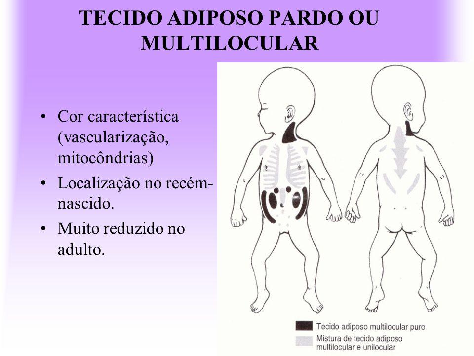TECIDO ADIPOSO PARDO OU MULTILOCULAR