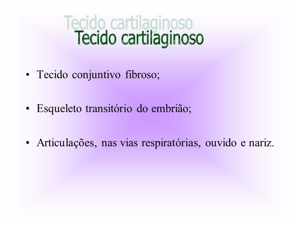 Tecido cartilaginoso Tecido conjuntivo fibroso;