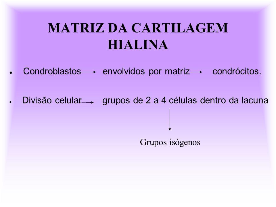 MATRIZ DA CARTILAGEM HIALINA