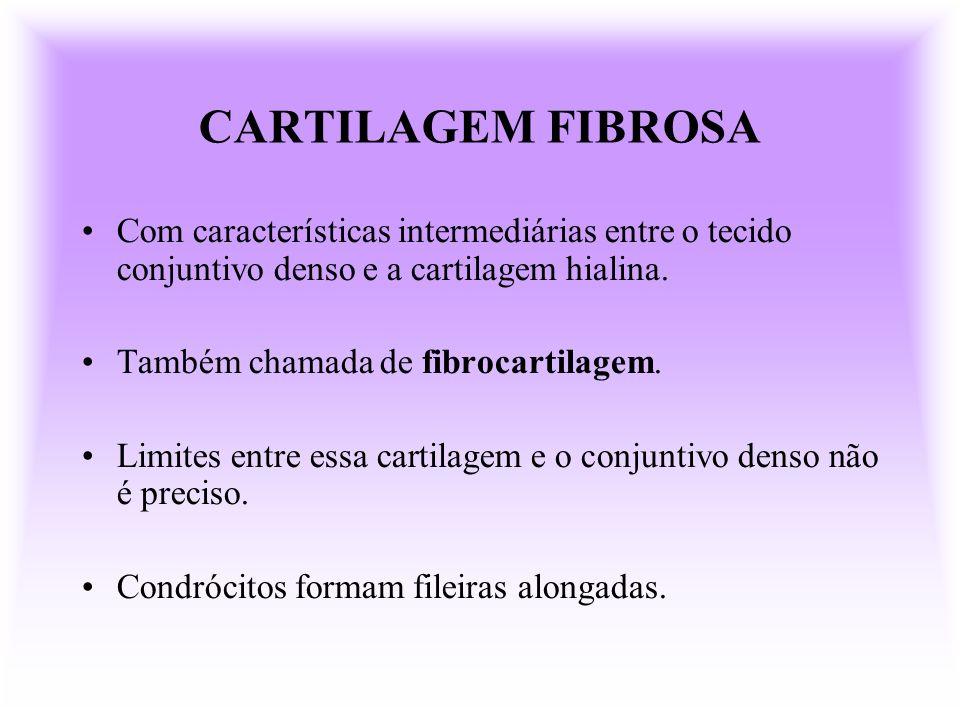 CARTILAGEM FIBROSACom características intermediárias entre o tecido conjuntivo denso e a cartilagem hialina.